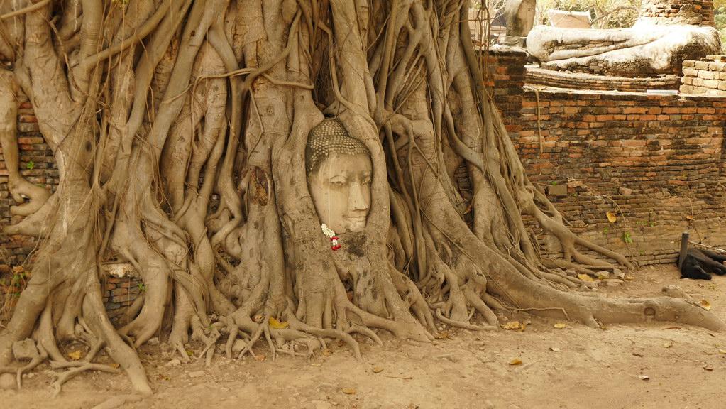 Wat Mahathat Ayutthaya Budhha eingewachen