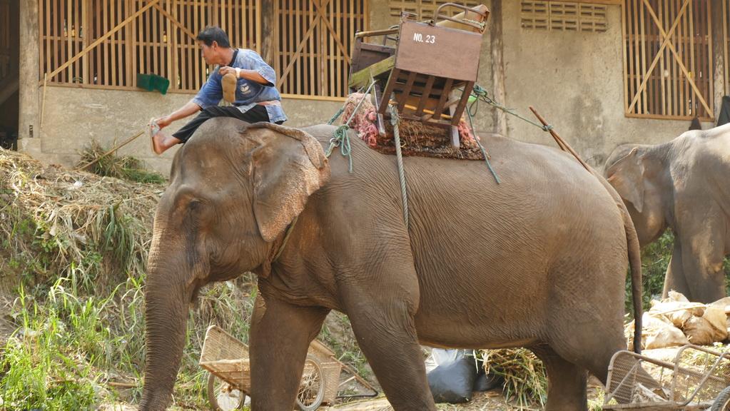 maesa-elephantcamp-chiangmai