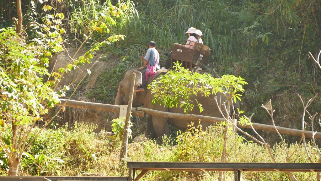 maesa-elephantcamp