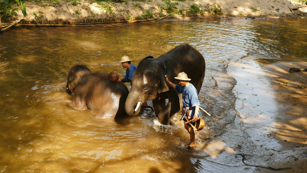 elefanten-beim-baden