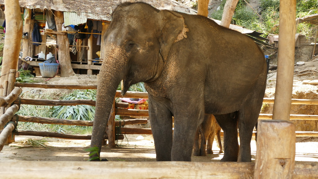 chiengmai-elefantcamp