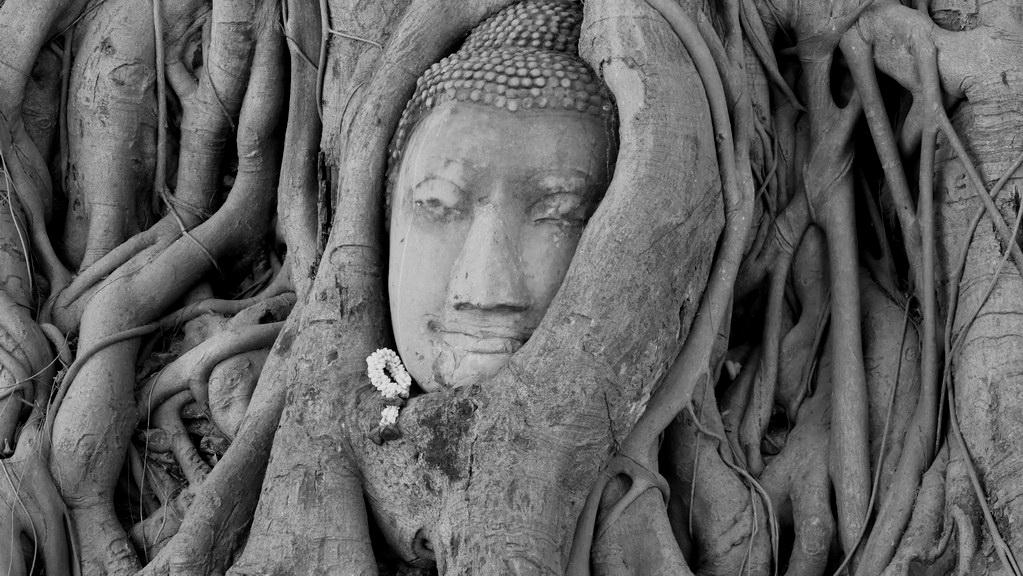 Ayutthaya Wat Mahathat Buddhagesicht im Baum eingewachsen