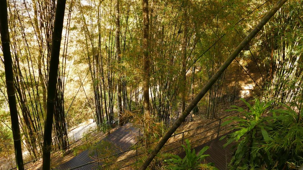 Weg durch den Dschungel