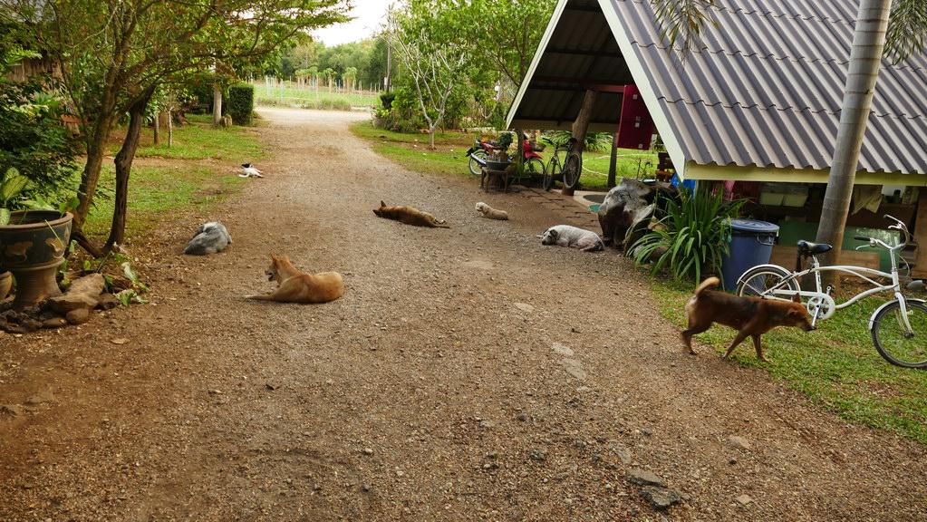 Hunde in der Einfahrt