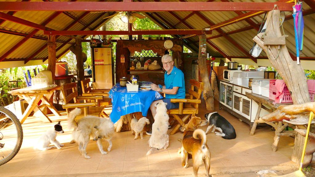 Frühstück mit Hunden