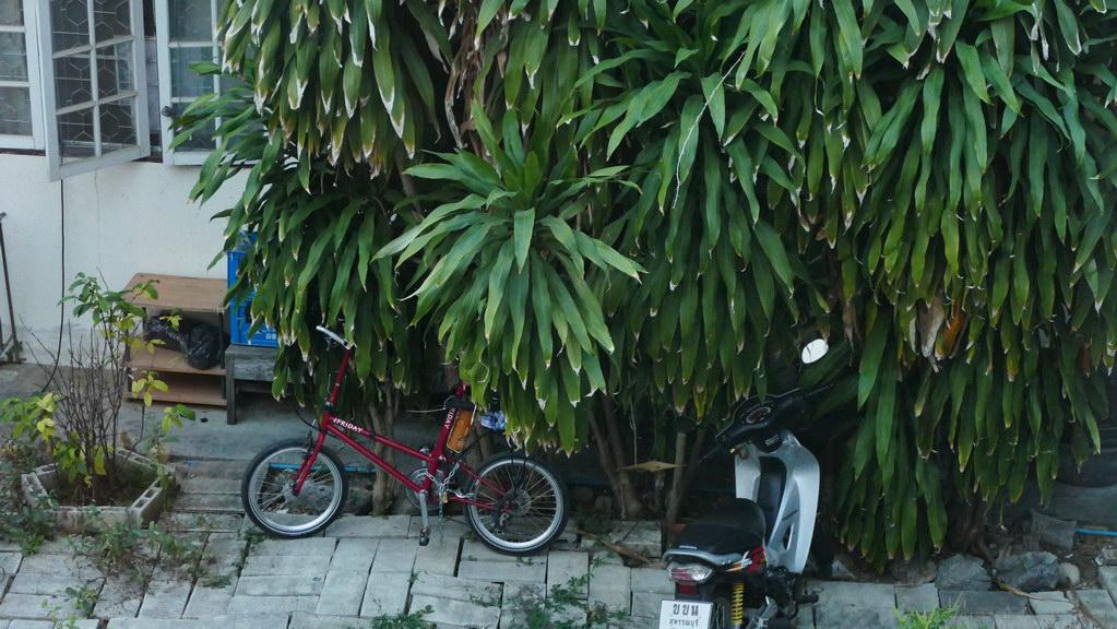 Fahrrad unter Palmen