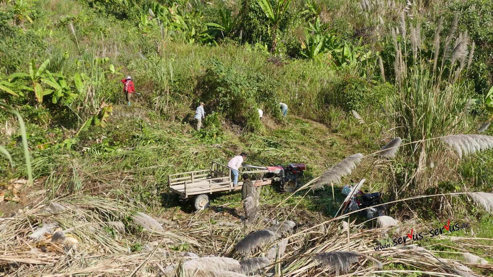 arbeit im dschungel in laos