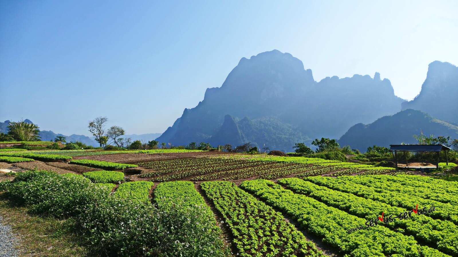 Gemüsefelder in den bergen von Laos