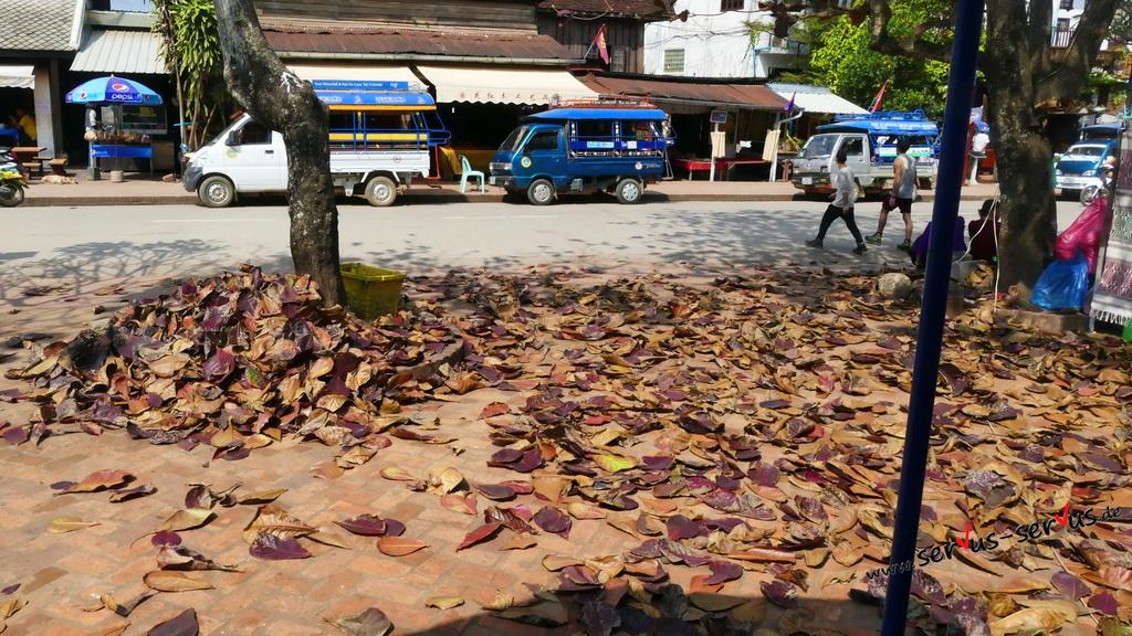 laos-herbst-blätter