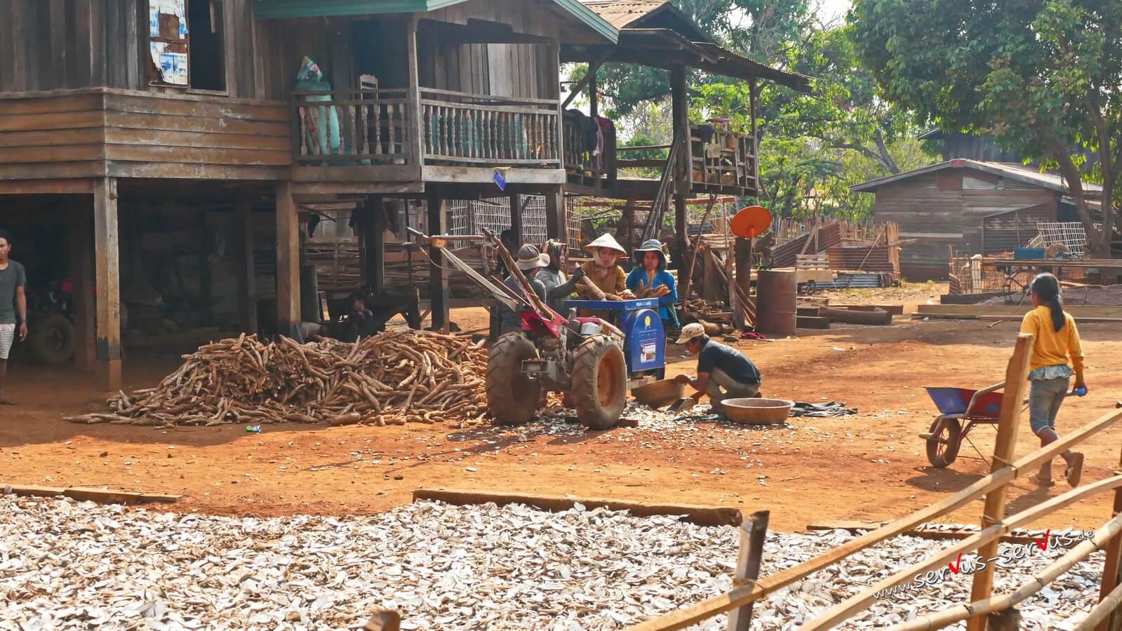 Maniok, Laos, Bolavenplateau