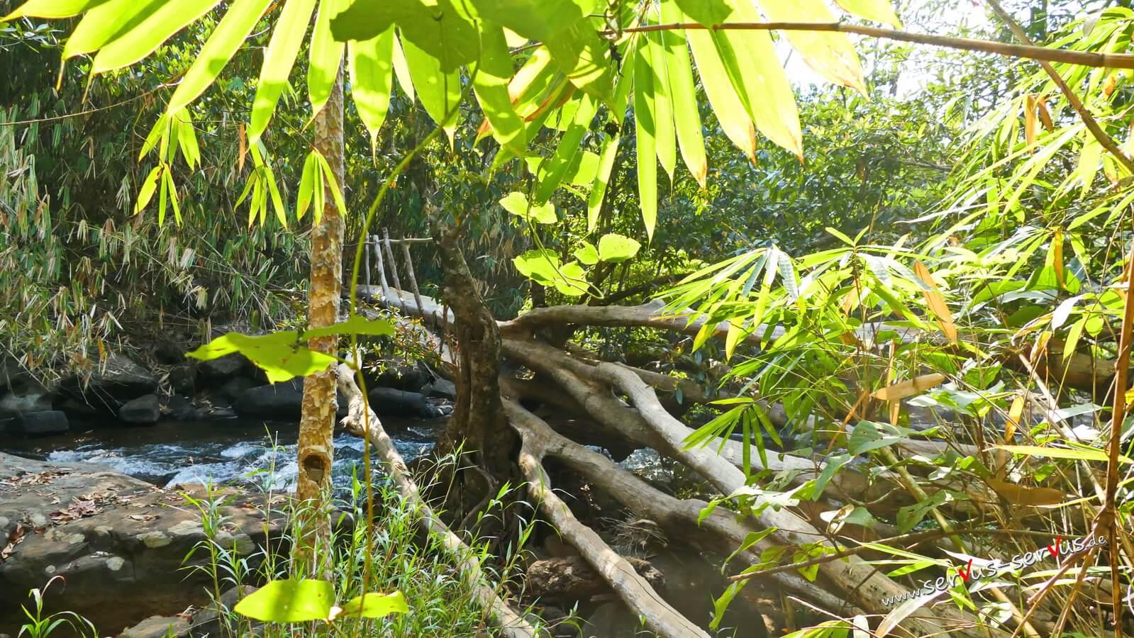 Steg im Dschungel, Laos