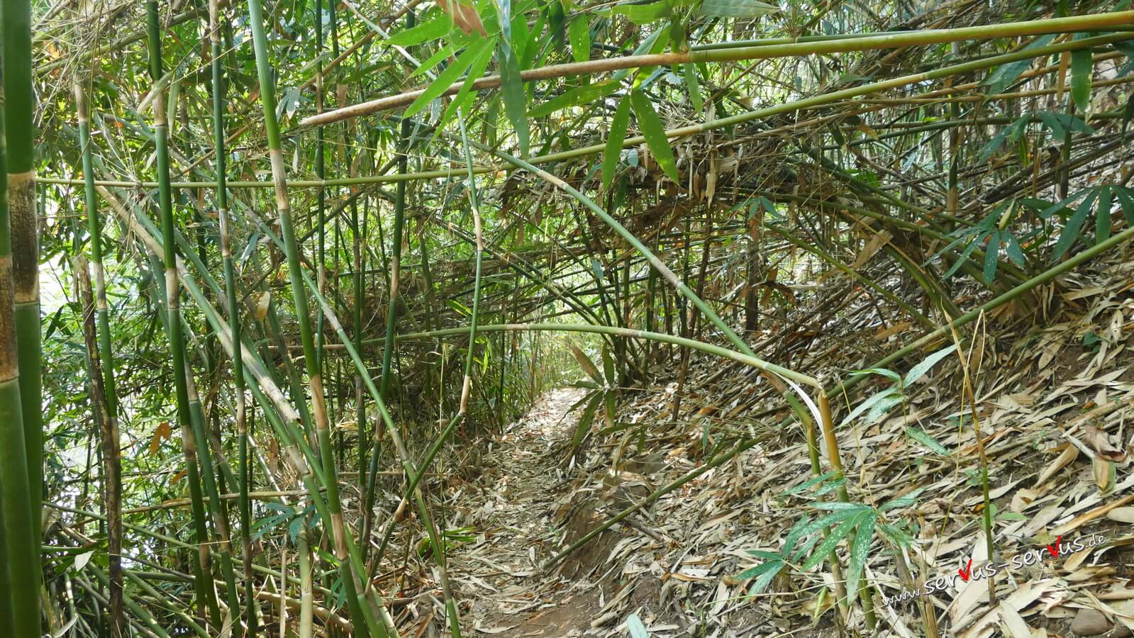 Dschungelpfad, Laos, Bolaven