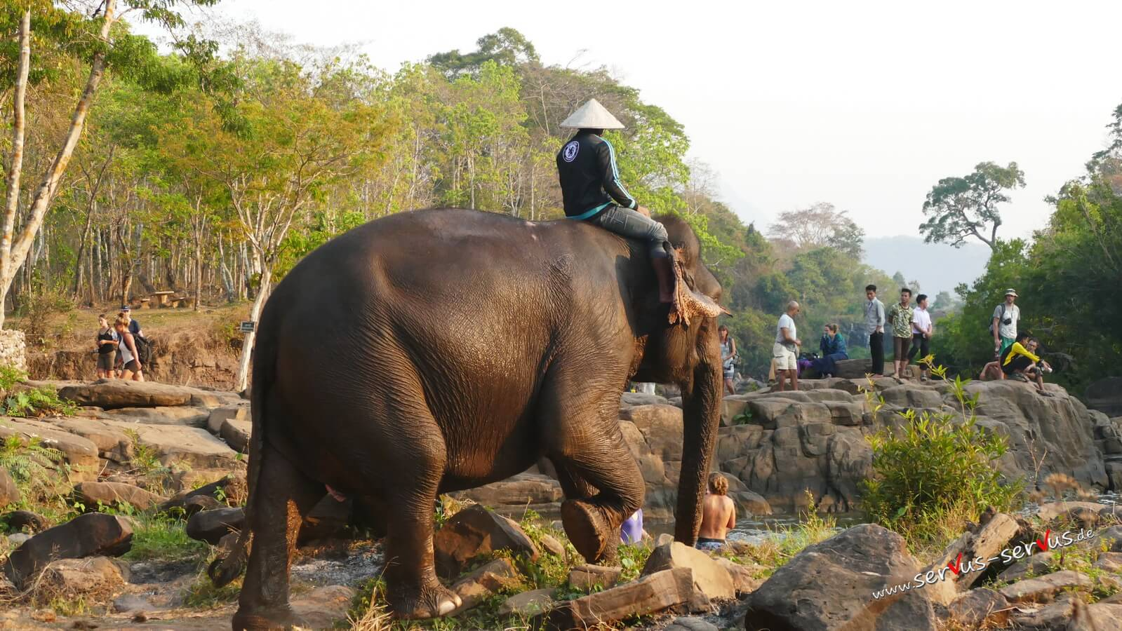 Elefanten, Tad Lo, Bolavenplateau, Laos