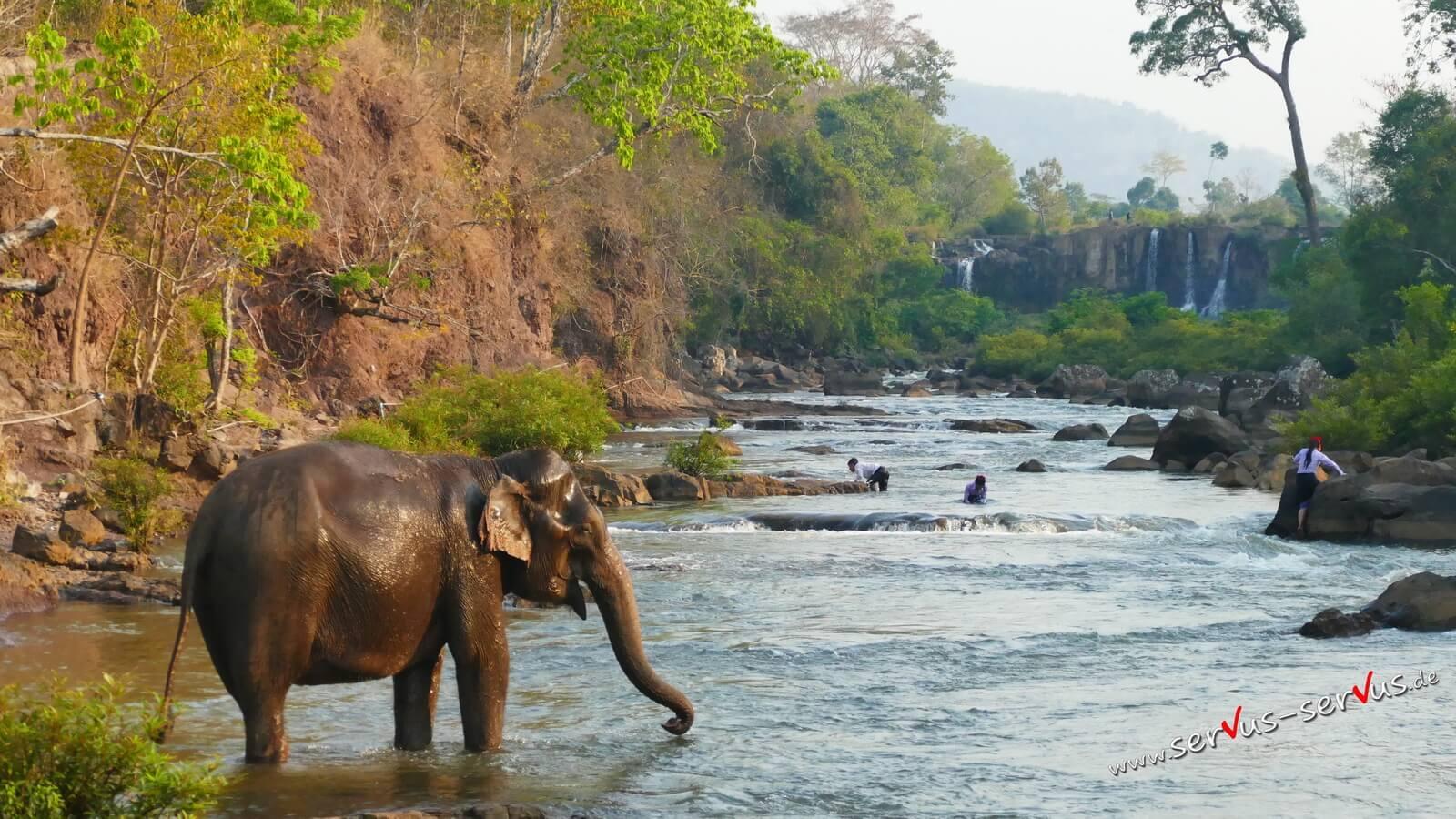 Wasserfall, Ta Lo, Laos, Elefant im Wasser