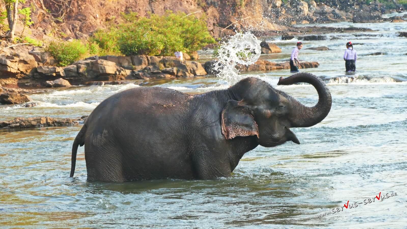 Wasser, Elefant beim Baden, Laos, Bolavenplateau