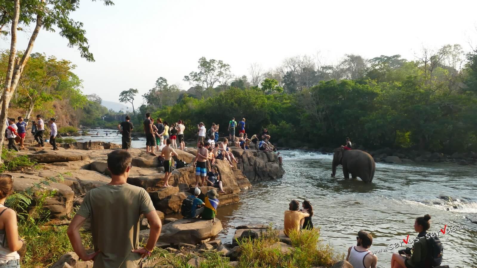 Elefanten Tad Lo, Laos, Bolavenplateau