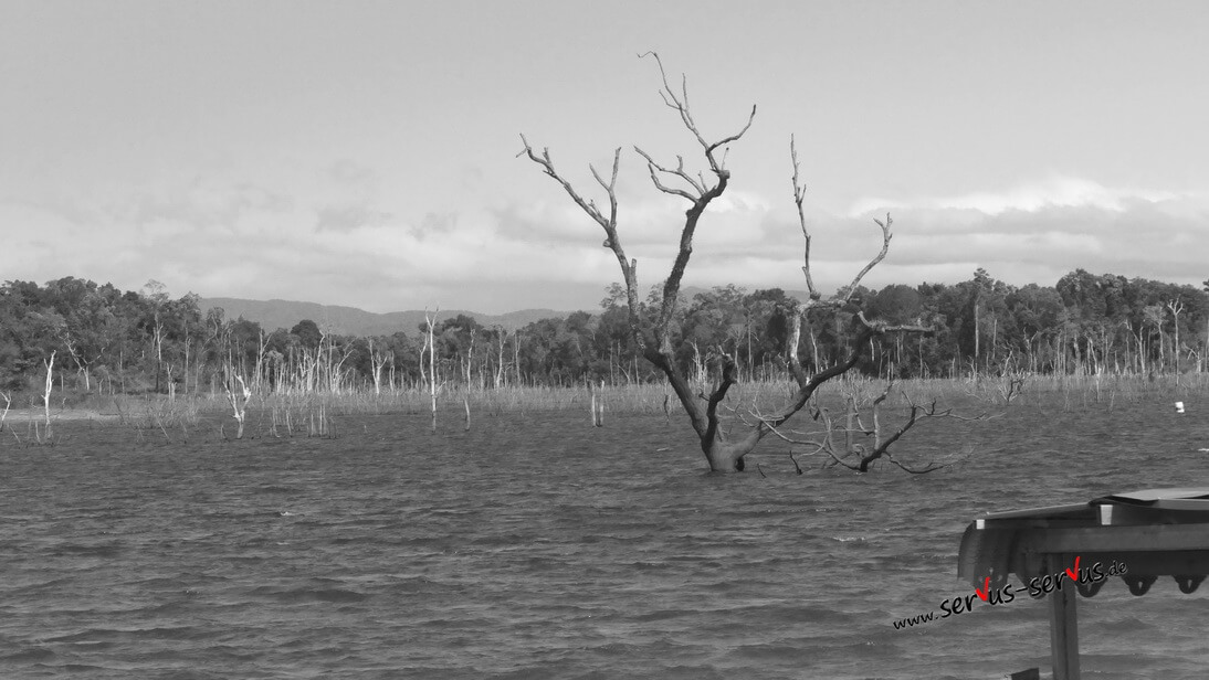 Abgestorbene Bäume im Stausee bei Thalet in Laos