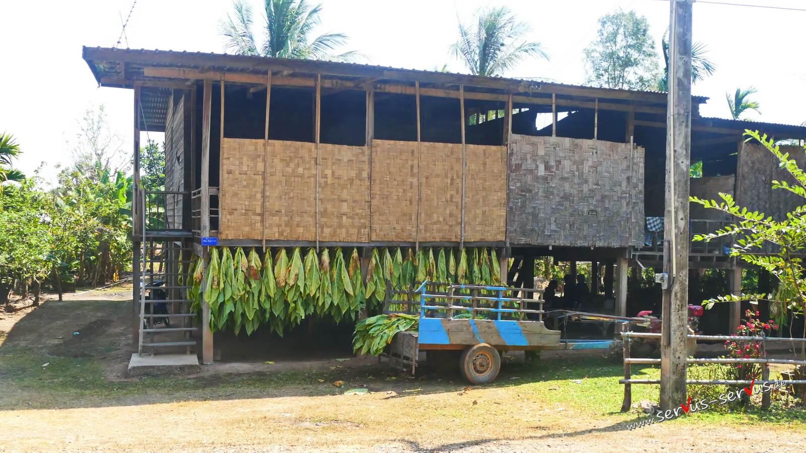 getrockneter Tabak am Straßenrand in Laos