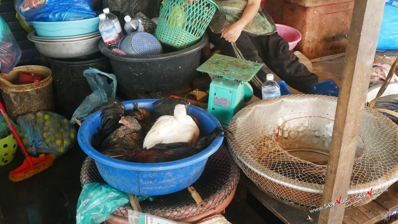 vientiane, laos, hühner