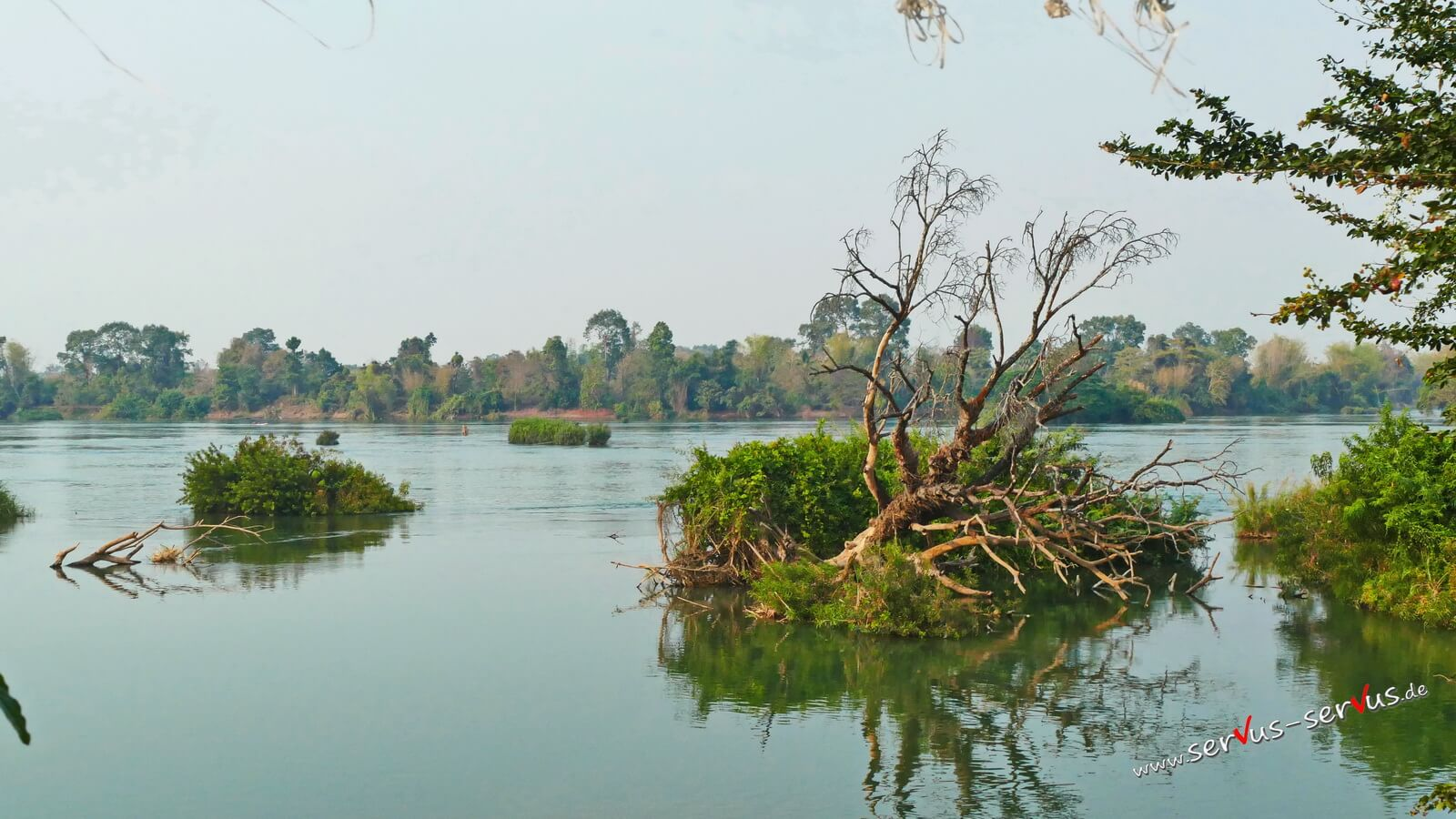 Mekong, Insel, Baum Don Det, 4000 Inseln, Laos,