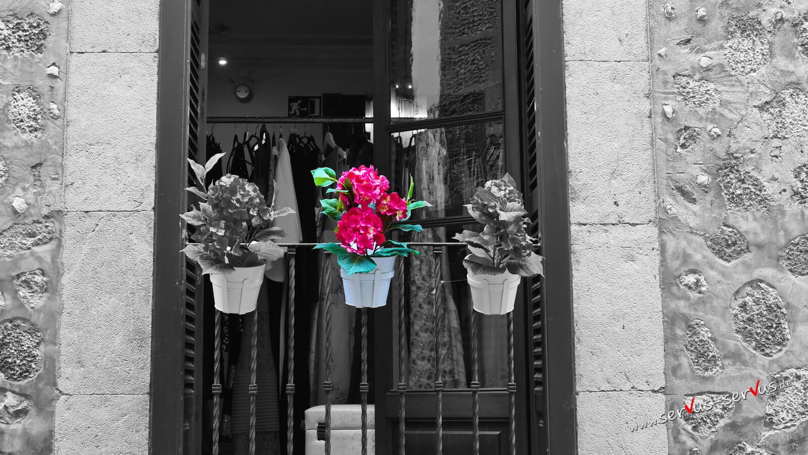 Blumen im Schaufenster