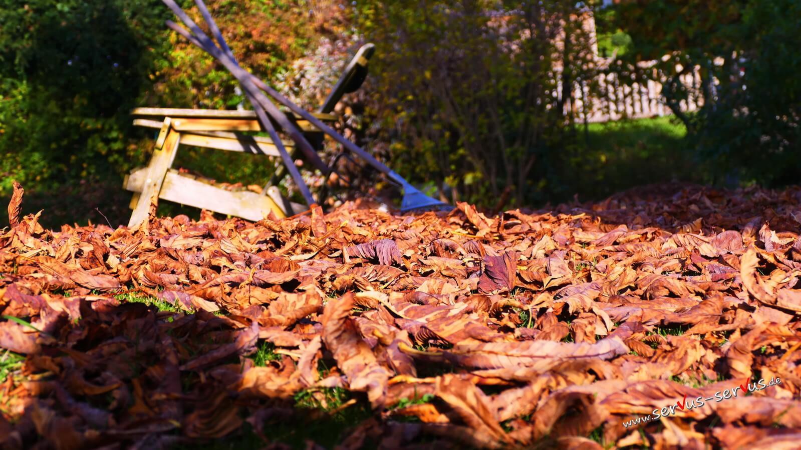 Herbstlicht auf Laub