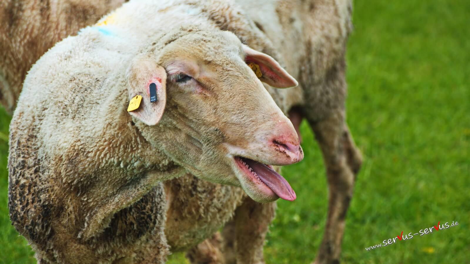 Tierisch: Einfach mal die Zunge rausstrecken