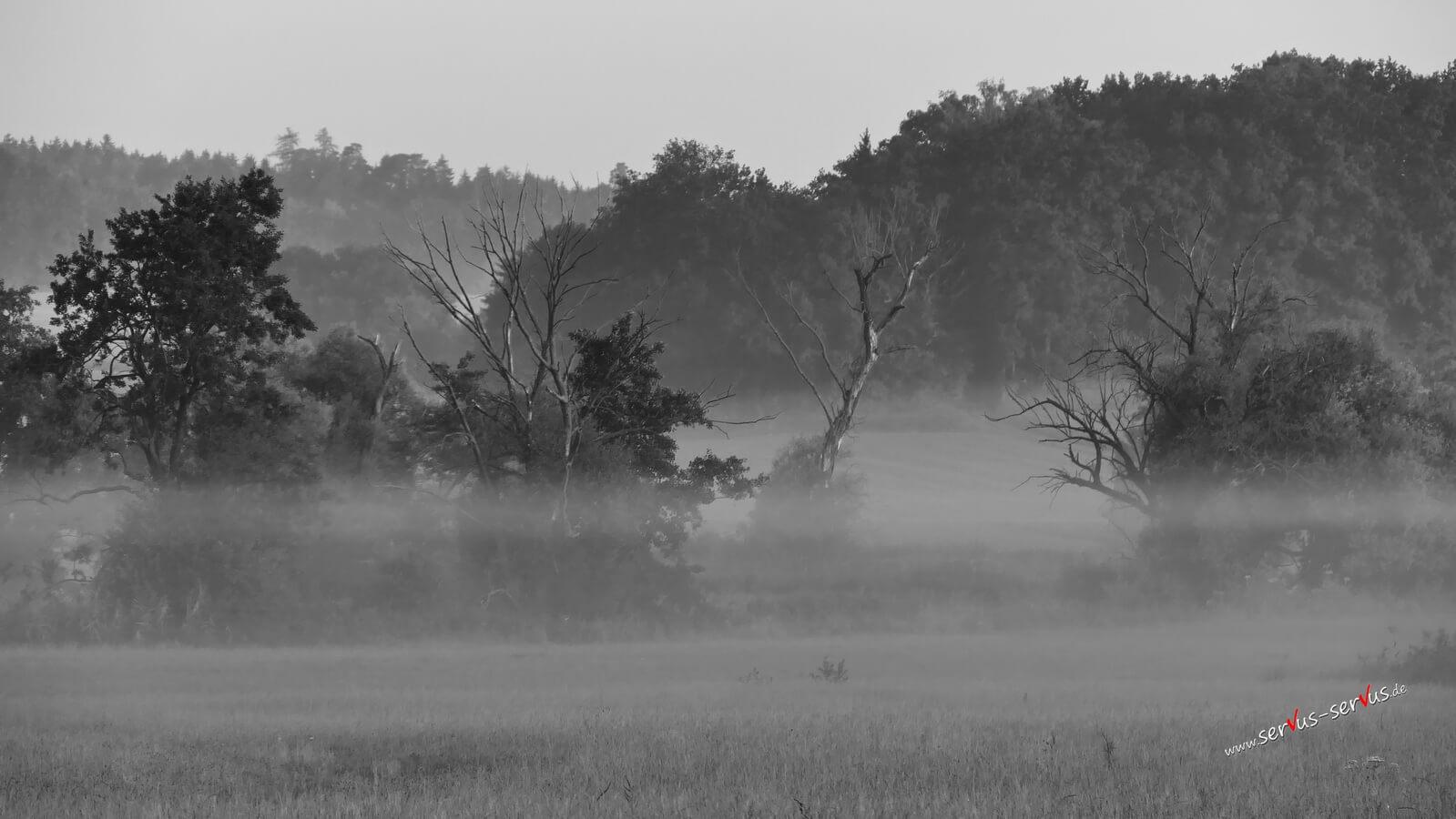 Nebel an der Schmutter