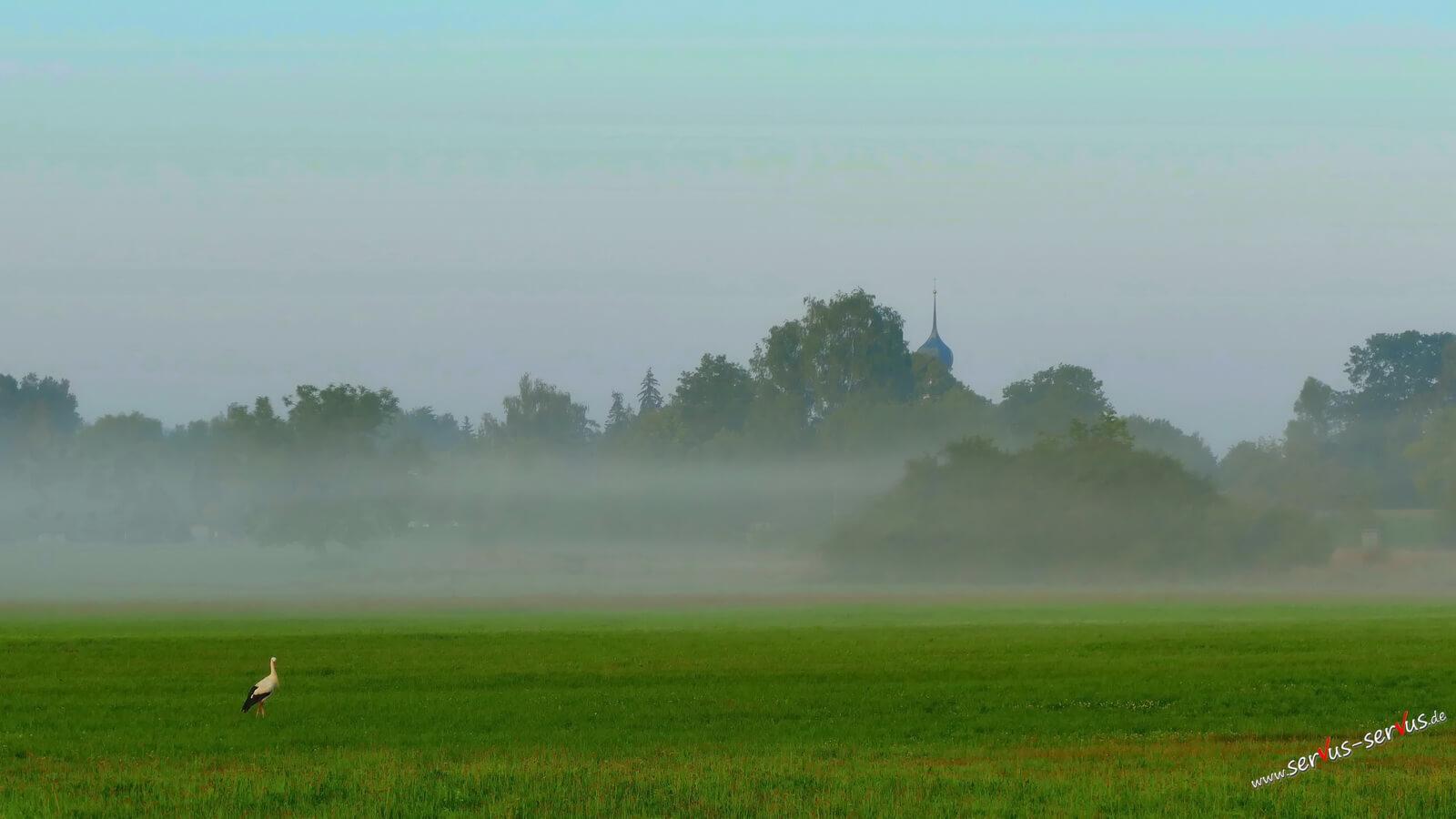 Storch im Nebel