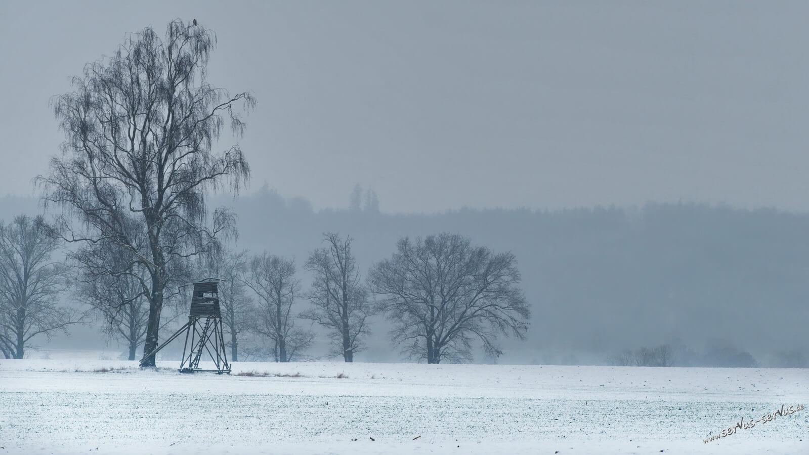 Schnee, Jägerstand und eine Birke im Nebel