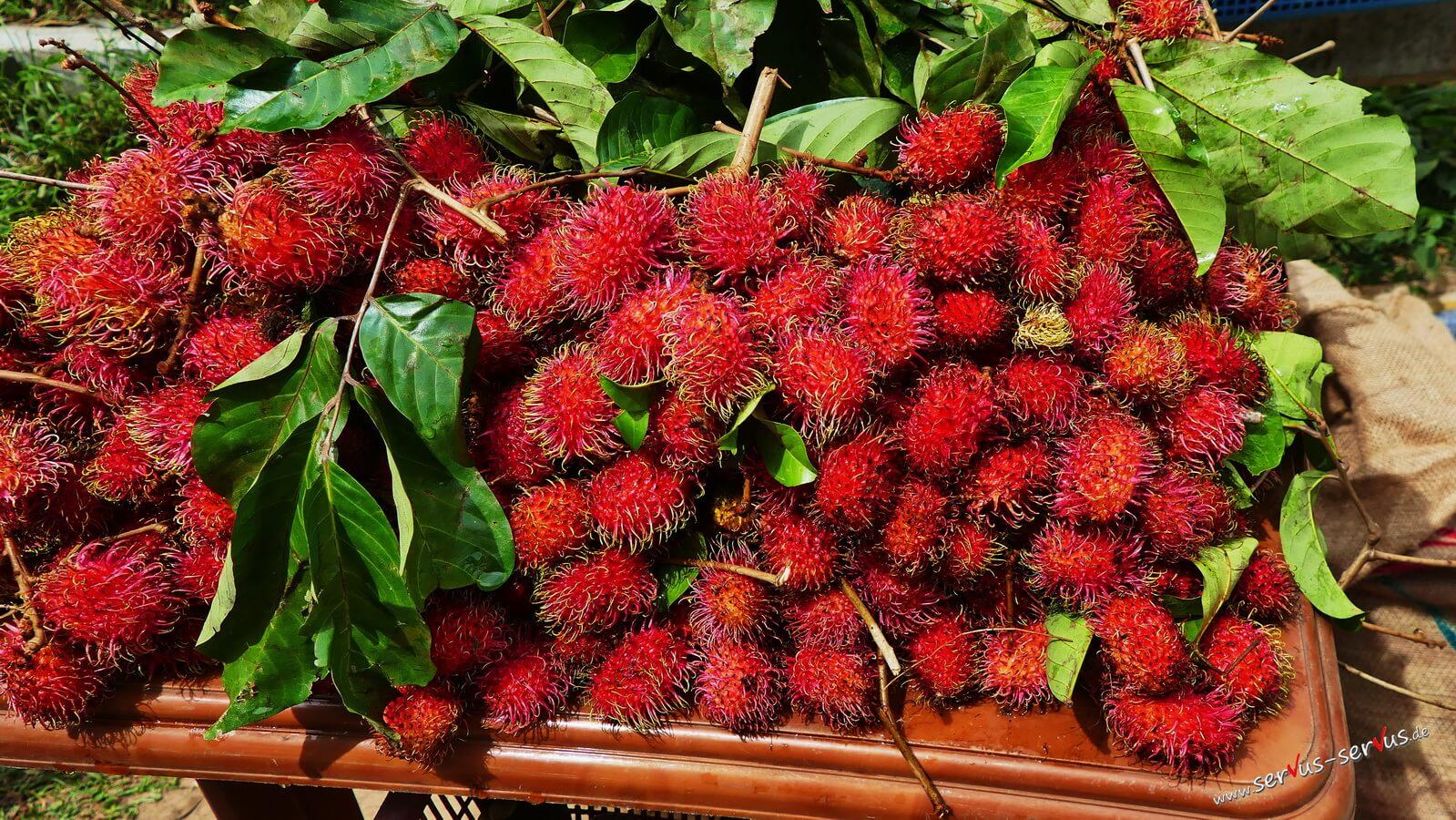 Rambutan exotische Frucht in Sri Lanka