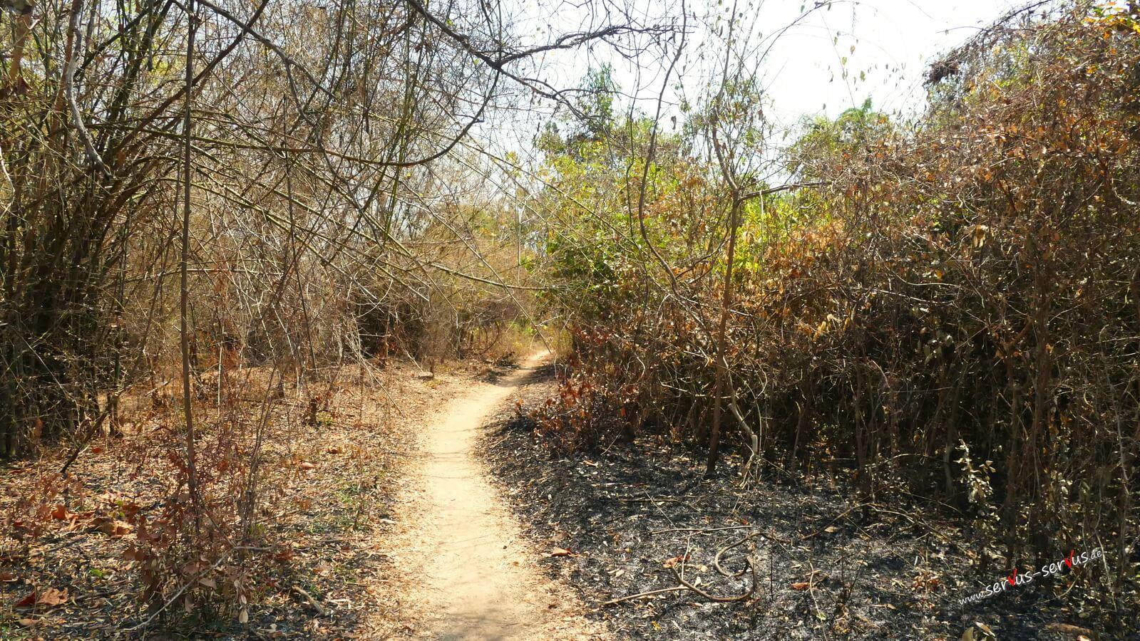 Dschungel, Don Det, Radweg, Laos
