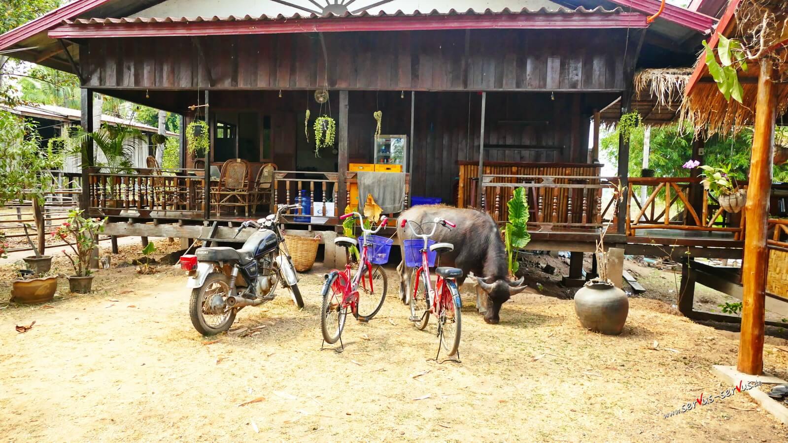 Don Det, Laos, Unterkunft, Wasserbüffel,